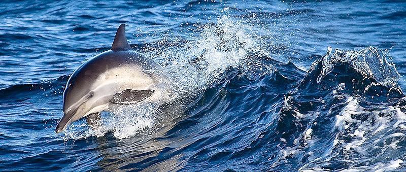 Благодаря своей грациозной красоте дельфины стали популярными моделями для фотографов со всего мира.