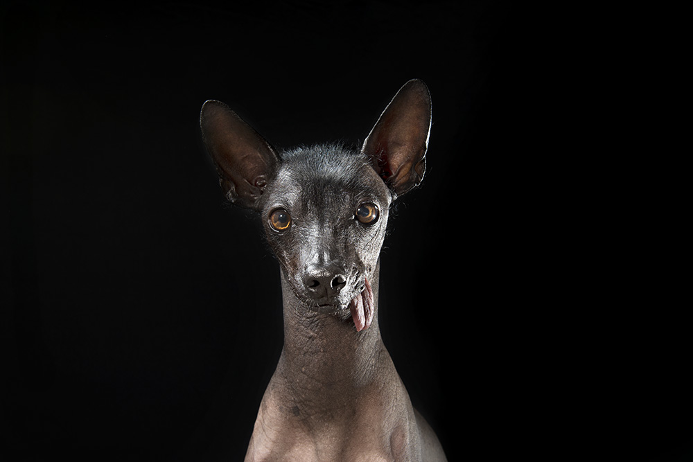 Prophecy is the latest dog portraiture project from New York-based photographer Sophie Gamand ( prev