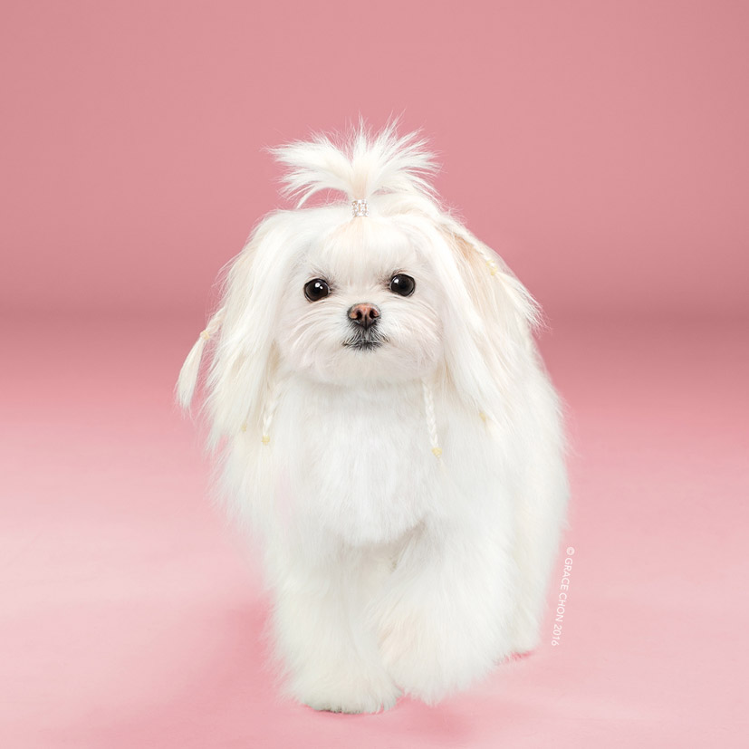 Grace Chon - Hairy - Yuki после посещения парикмахера