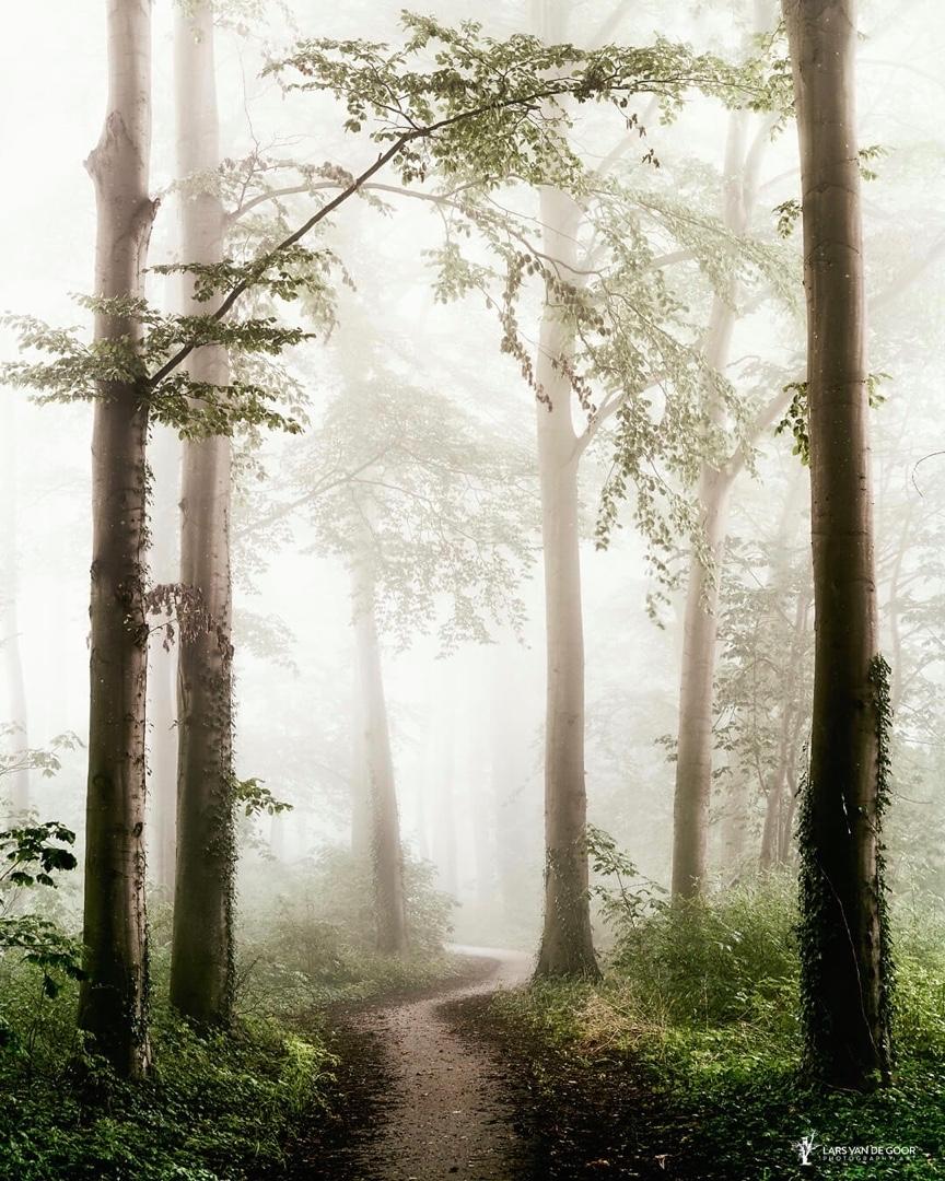 Природа на снимках Ларса ван де Гура