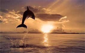 Международный день Черного моря открытки фото рисунки картинки поздравления