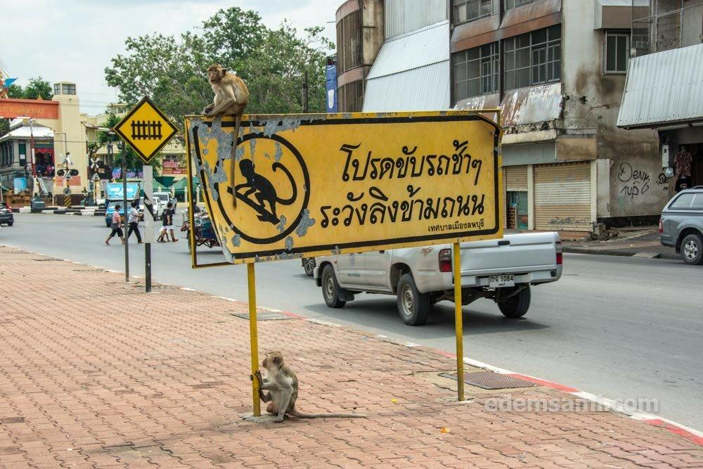 Лопбури обезьяны