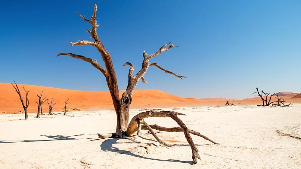 © Bobulix/flickr     Мертвые деревья долины Dead Vlei — своеобразные памятники с