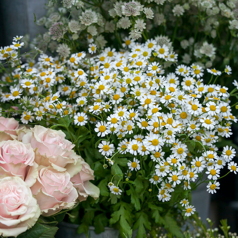 the Cream roses, garden camomiles and Astrantia, major Roma for sale on the market. An excellent decoration for the garden