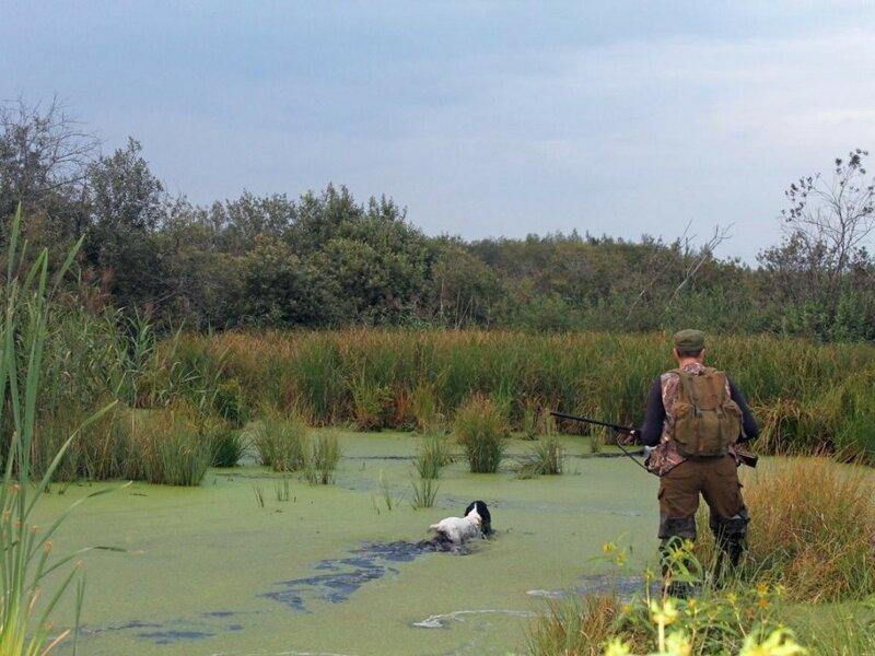 Охота на болотах и озерах