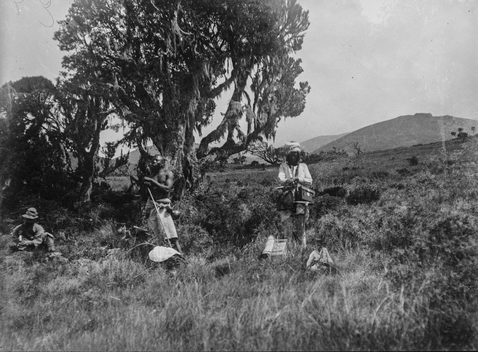 276. Ландшафт в районе Килиманджаро