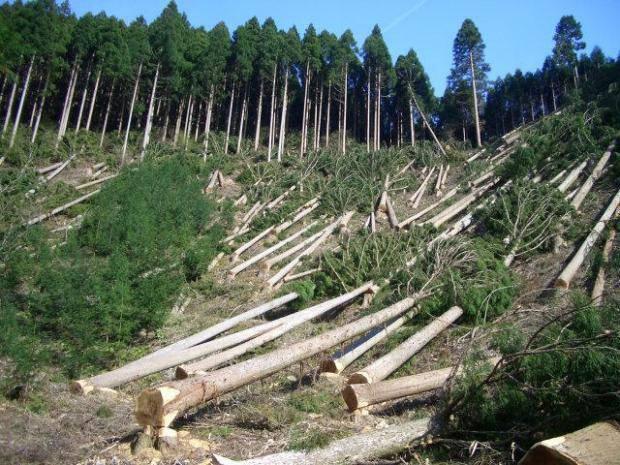 Когда топор разворачивается в другую сторону: За варварскую вырубку лесов в Закарпатье полетели головы пограничников