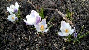 Весна идет весне дорогу - Страница 26 0_1382e3_90b783fe_-1-M