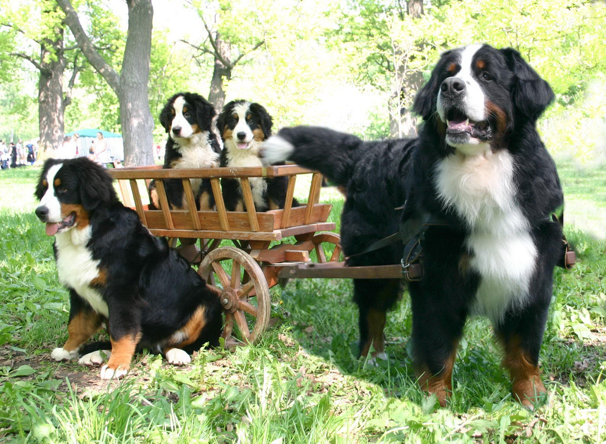 Велика родина