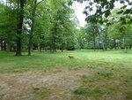 Моя прогулка в парке с Розой