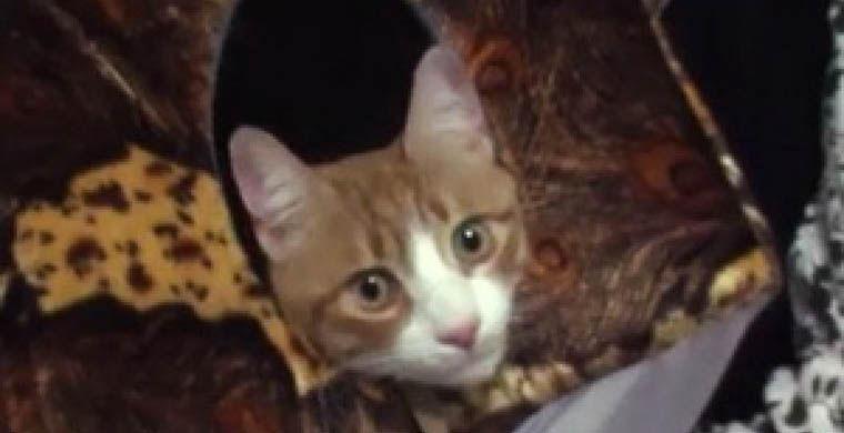 3. Беспородный кот Барсик Расстояние: 200 км Сколько отсутствовал: пять недель Хозяева трехлетнего к