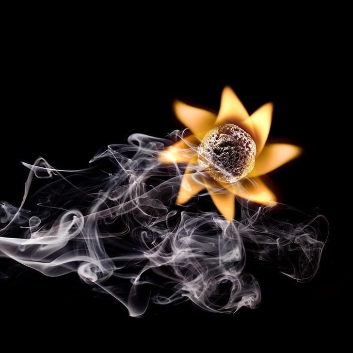 Аленький цветочек Источник: kulturologia.ru