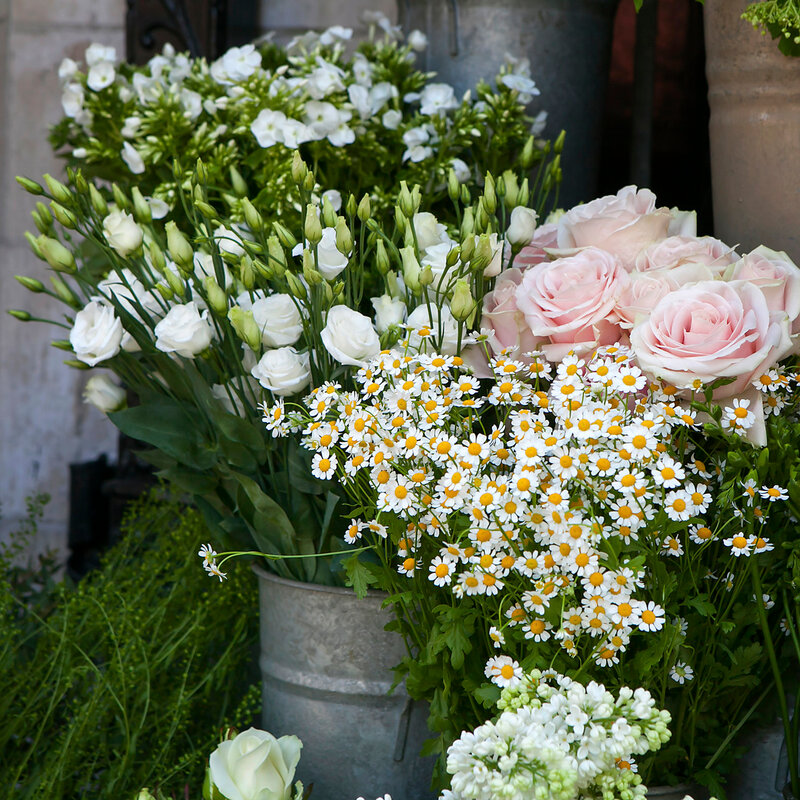 Bouquet of white daisy and rose