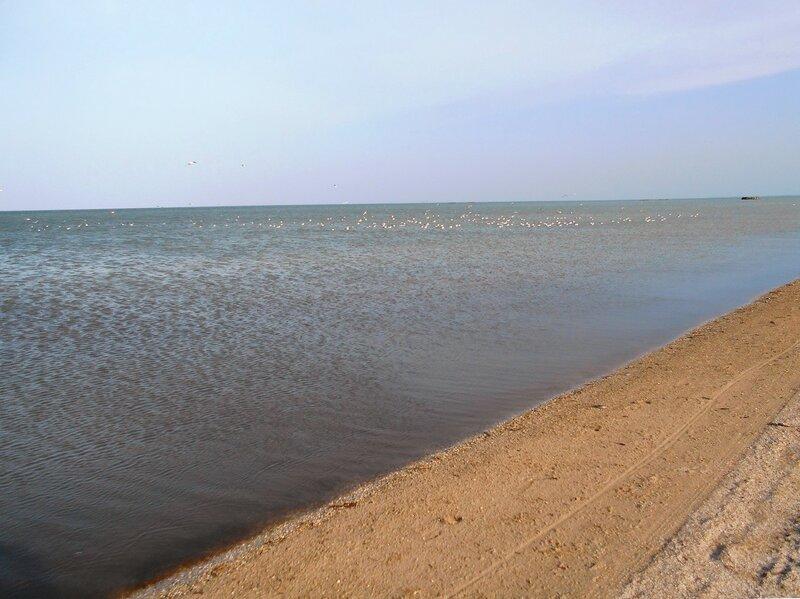 У моря ... чайки на воде ... DSCN5054.JPG