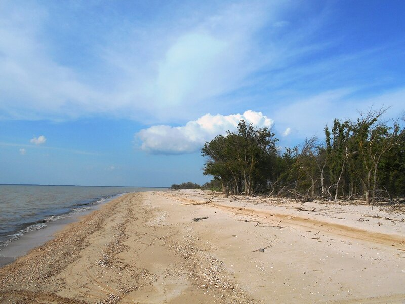 Берег песчаный, лес весенний ... DSCN5771.JPG