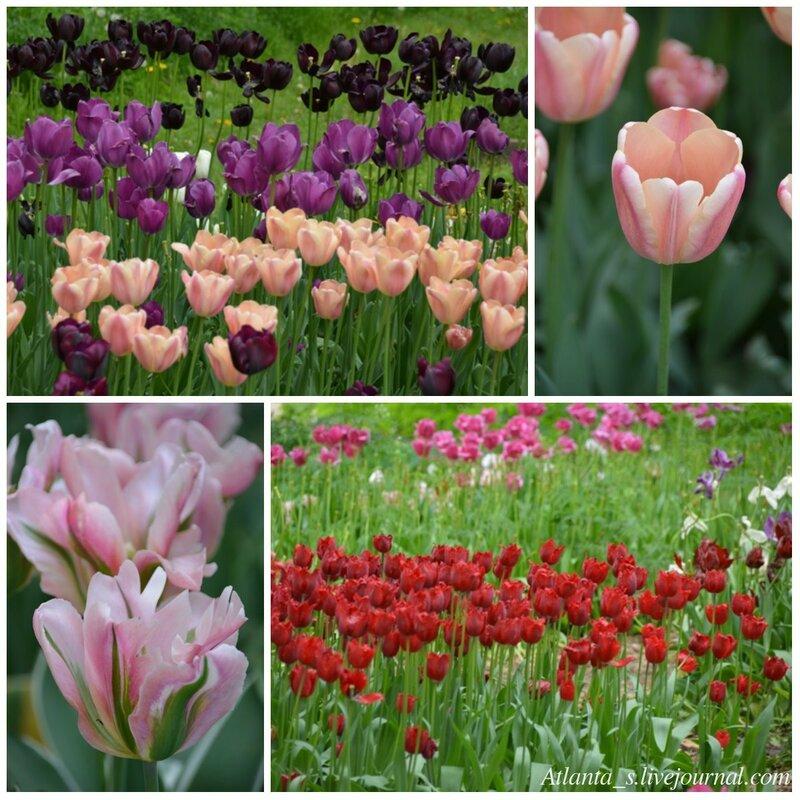 watermarked - тюльпаны5.jpg