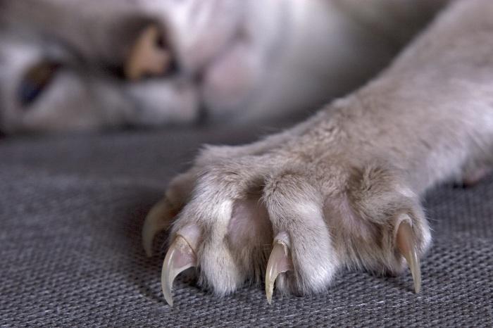 Эффективные технологии, которые люди «подсмотрели» у животных