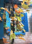 Осень стучит в окно родительского дома.