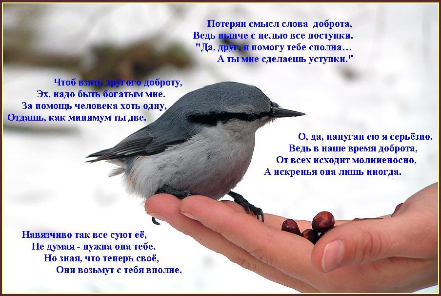 Открытки. Всемирный день доброты. Птица открытки фото рисунки картинки поздравления