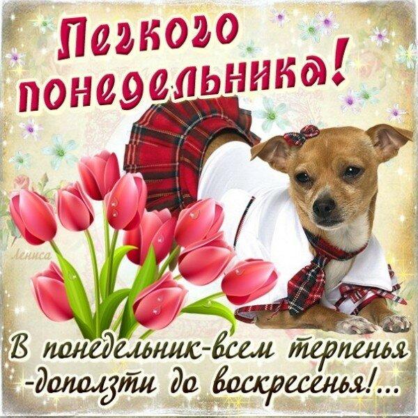 Что, веселые открытки с собаками с пожеланием хорошего рабочего дня