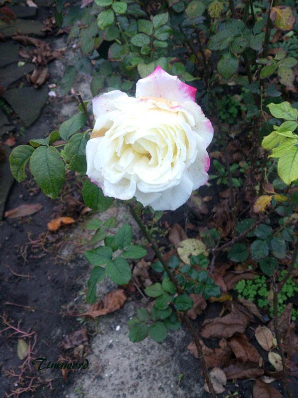 цветы-осени-6.jpg