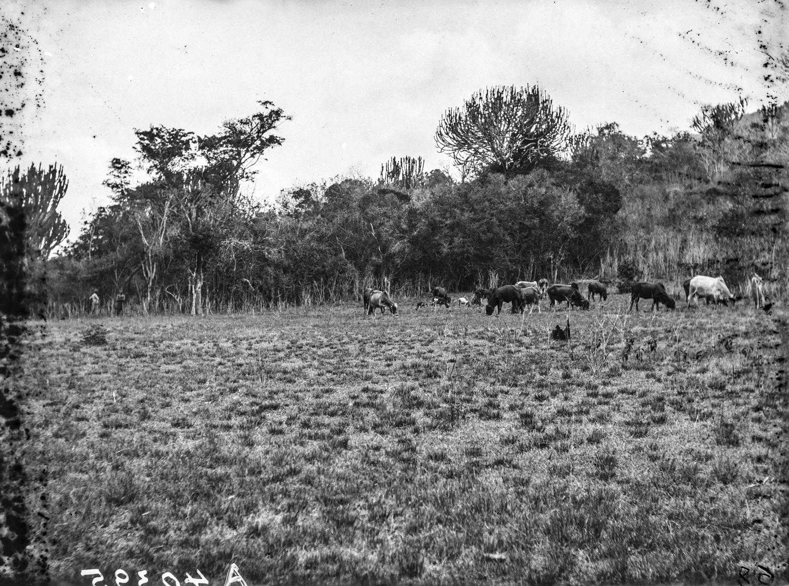 106. Выпас скота в горах Усамбара