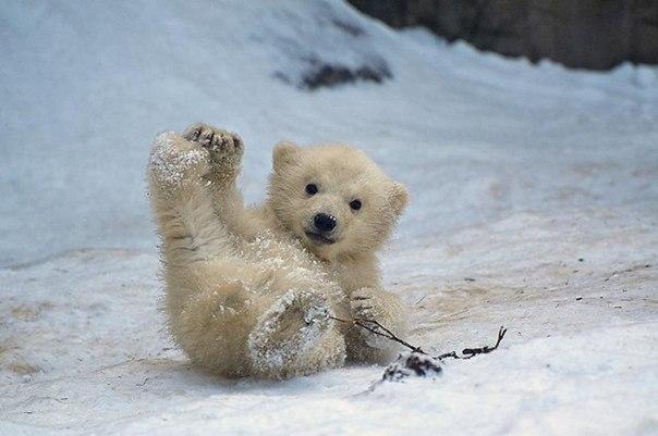 Международный день полярного медведя. Упавший малыш открытки фото рисунки картинки поздравления