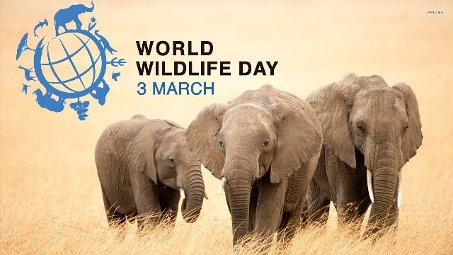 Открытки Всемирный день дикой природы. С праздником вас!