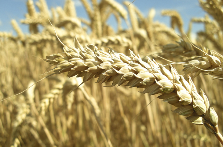 безопасность ГМО десятка опасность пищевая промышленность