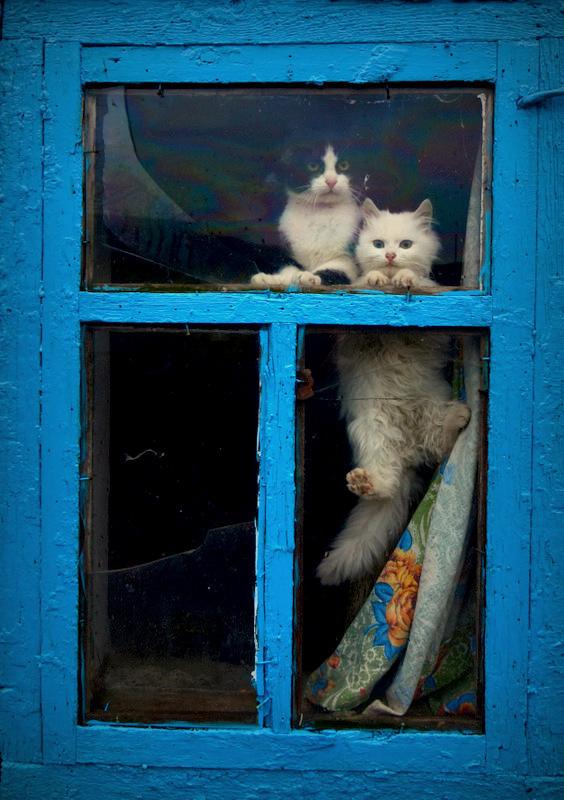 Главное, чтобы дома кто-то ждал (18 фото)