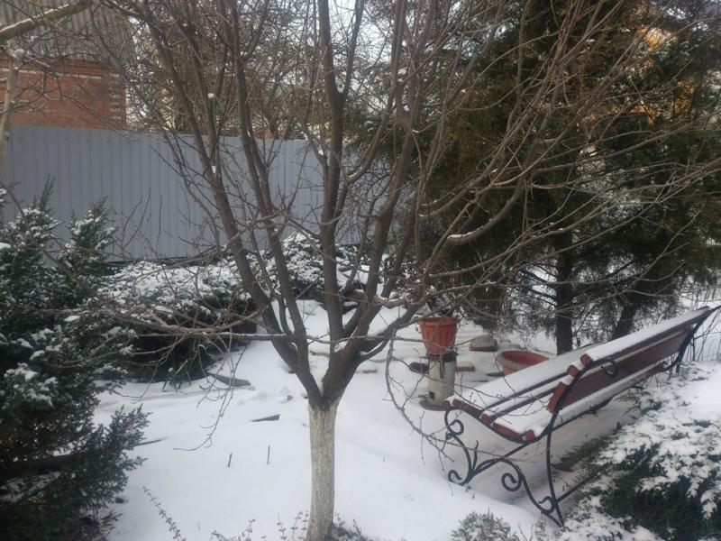 снег-004.jpg