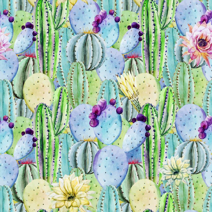 Inspiring Cactus Photographs and Illustrations on Fotolia (10 pics)