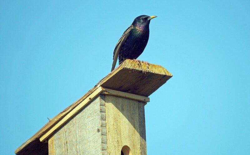 на крыше дома своего...