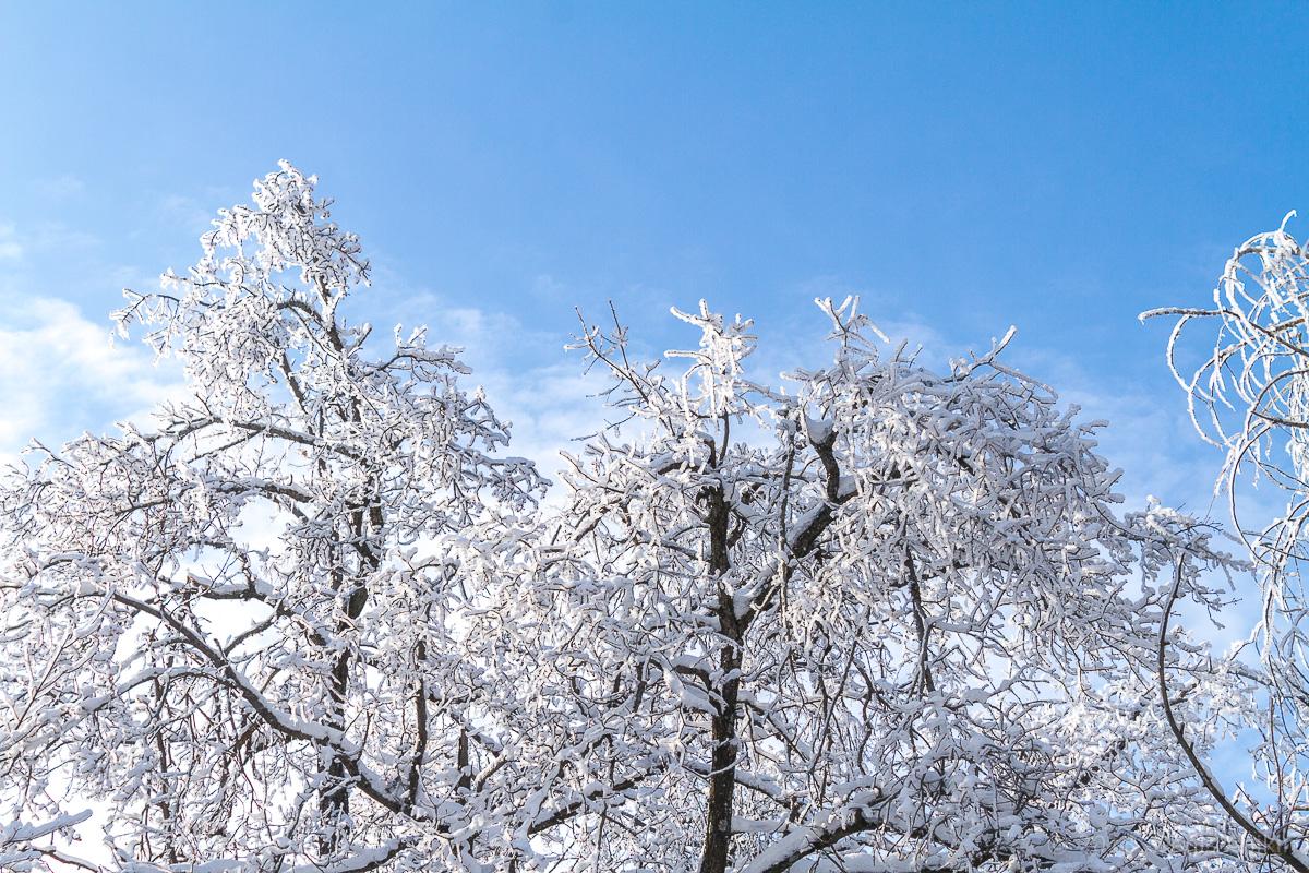 Зима кумысная поляна фото 8