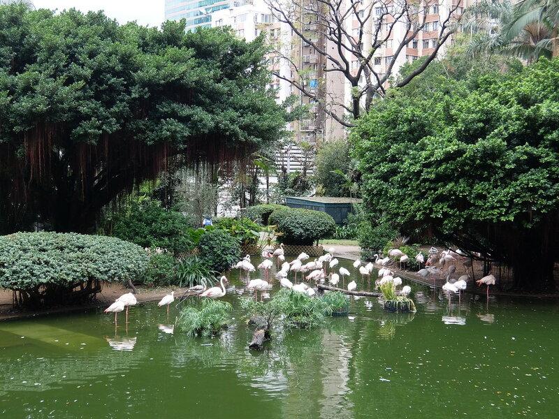 Гонконг - Фламинго в Коулун парке