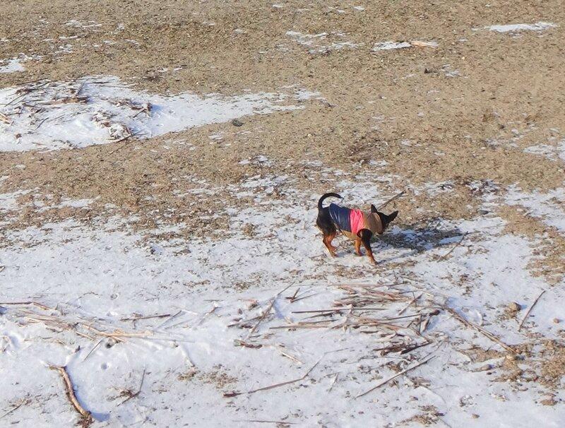 Собака в январе, год 2018 (5).JPG