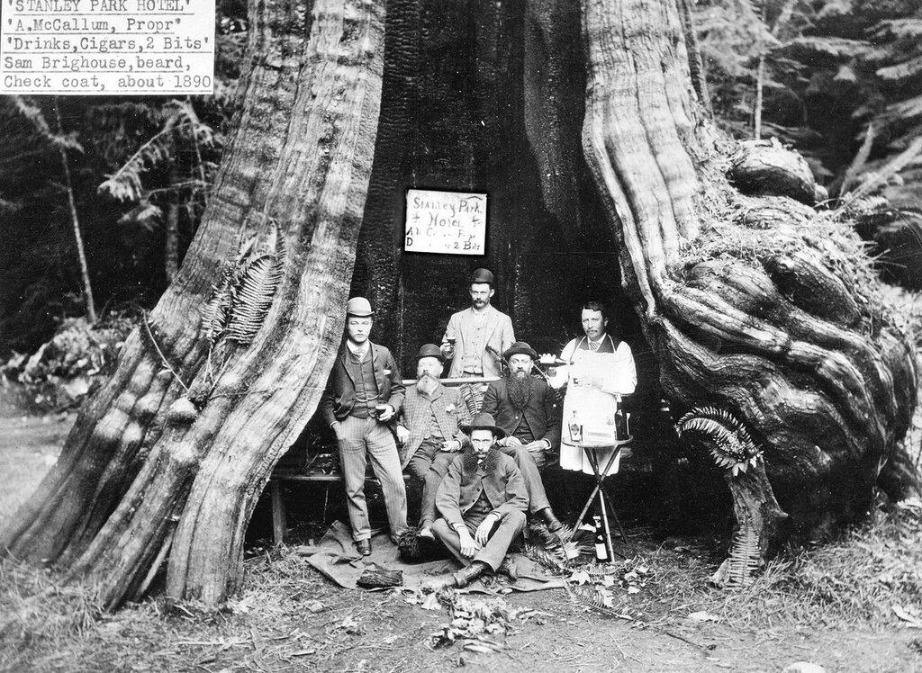 1890. «Пустотелое дерево», Стэнли Парк