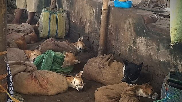 Собак, которых собирались пустить на мясо, спасли в Индии