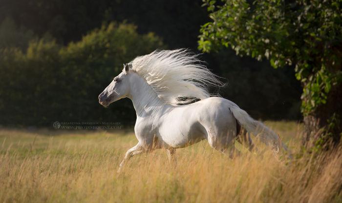 the-white-spirit__700.jpg