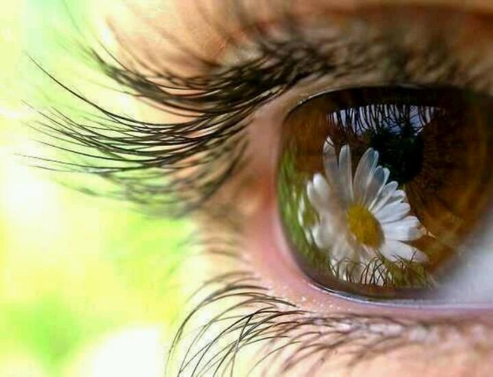 30 октября День карих глаз. Мир из цветов