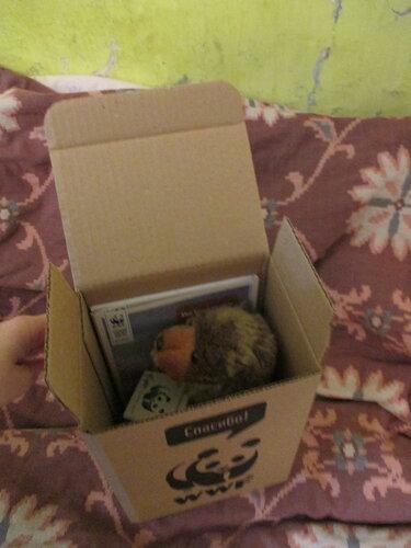 Медведь в коробке