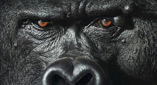 Студийные портреты диких животных от Тима Флака (10 фото)