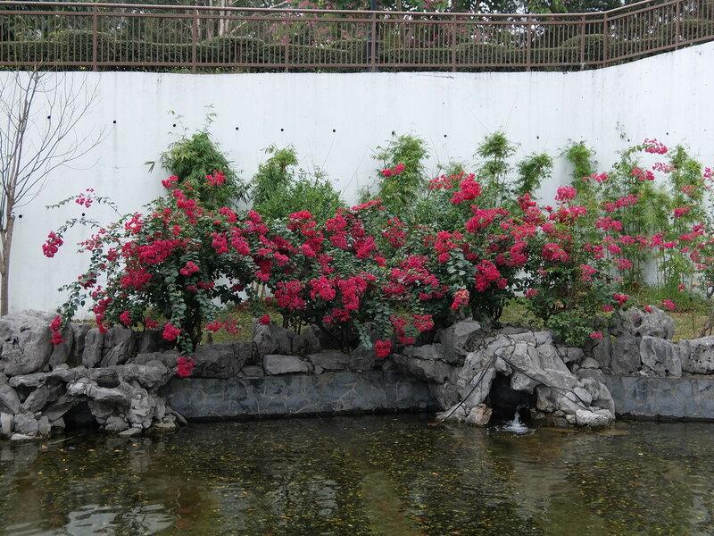 Гонконг - Парк Город, обнесенный стеной - Цветы