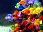 colorful-807077.jpg