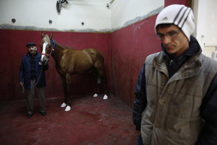 2. У лошади повреждена нога во время скачки, нужно сделать рентген. (Фото Murad Sezer | Reuters):