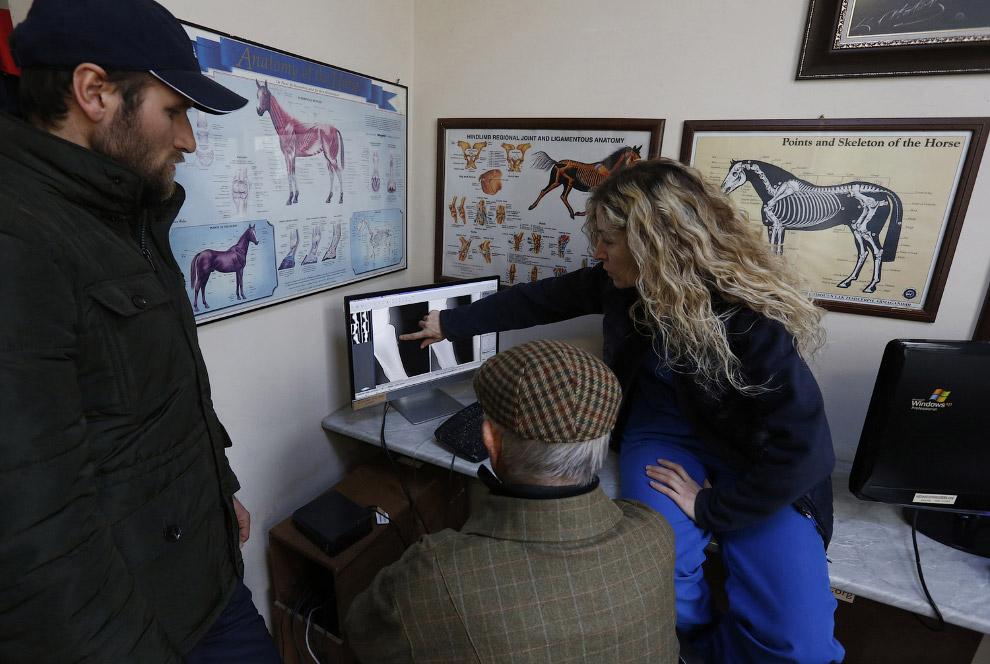 4. У этой лошади, видимо, что-то с суставами. Данную процедуру фотограф описывает как «физиотер