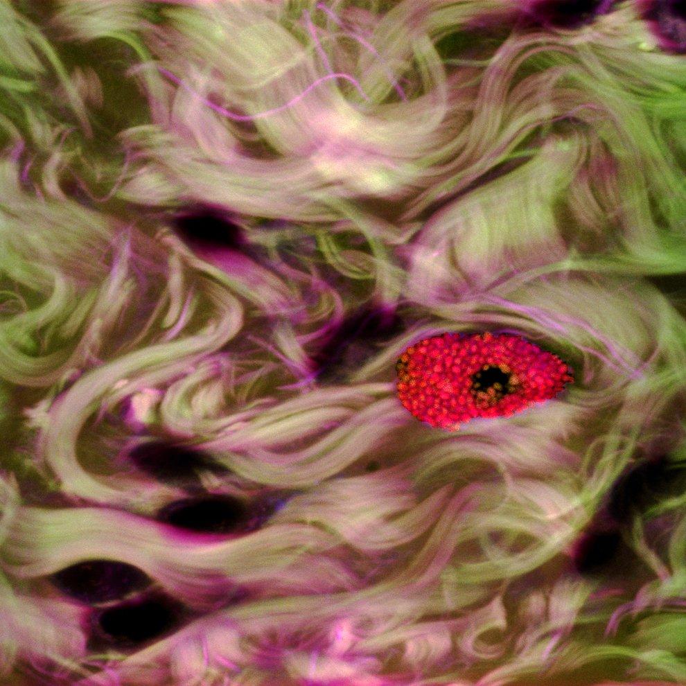 Поощрительная премия.  Глаз стрекозы  при 20-кратном увеличении. (Фото Dr. Igo
