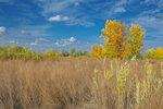 Осень. Трава по пояс...