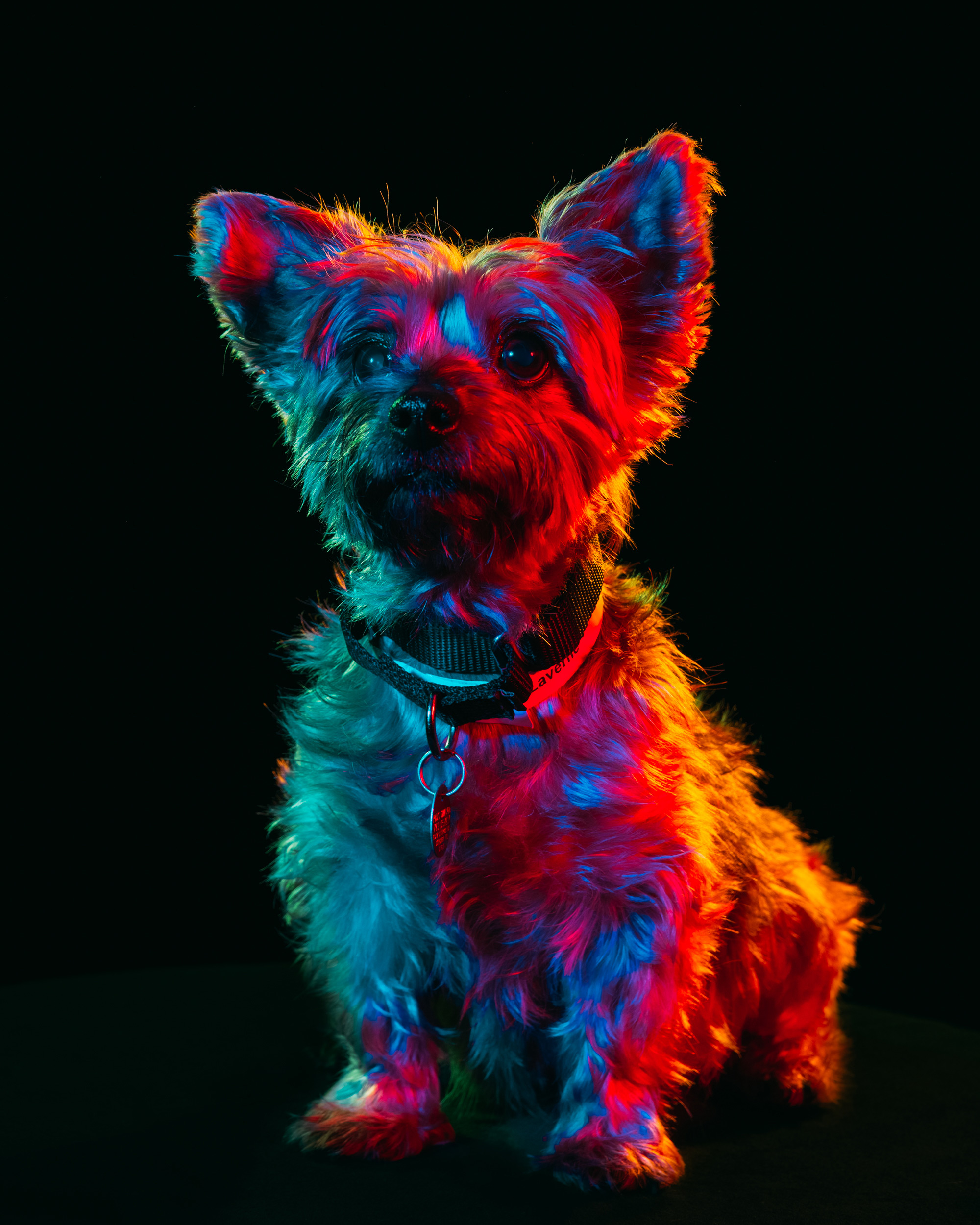 Colorful Portraits of Adoptable Dogs Photographed by Paul Octavious (6 pics)