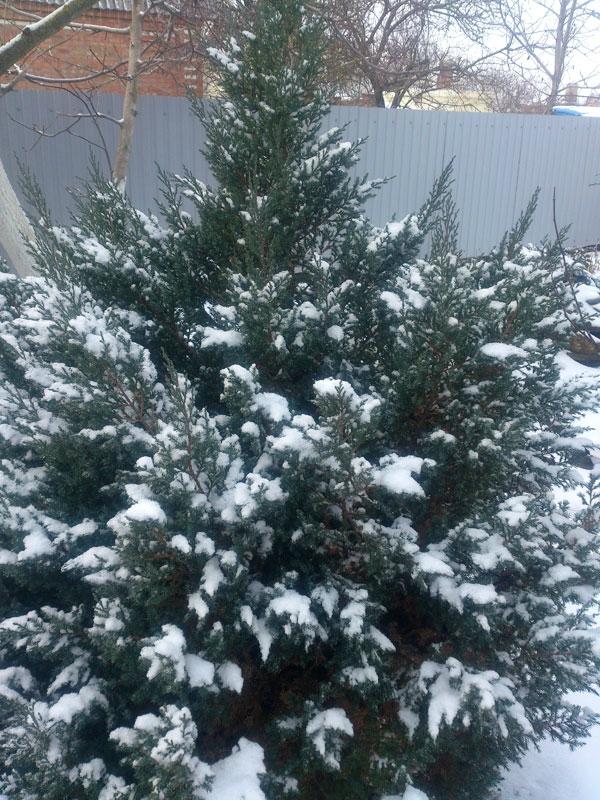 снег-08.jpg